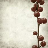 picture of winterberry  - textured old paper background with branches of winterberry - JPG