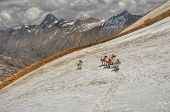 image of mule  - Caravan of mules in high altitudes of Himalayas mountains in Nepal - JPG