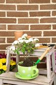 picture of plant pot  - Flowers in pot on stepladder - JPG
