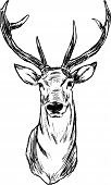 stock photo of deer head  - vector  - JPG
