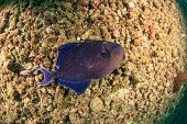 stock photo of kill  - Dead fish underwater killed by pollution and environmental damage - JPG