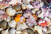 picture of sanddollar  - Starfish and seashells souvenirs for sale at street - JPG