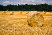 picture of food crops  - Harvest time of wheat scenic landscape golden rye field with haystack season of crop farm producing food cultivated organic seeds of bread beauty of nature in autumn - JPG