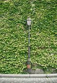 ������, ������: Lantern Of Paris In Green Wall Background