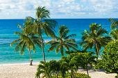 foto of caribbean  - Palms on the white beach and a turquoise sea on a Caribbean island of Barbados - JPG