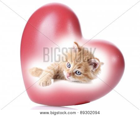 Cute kitten in red heart isolated on white