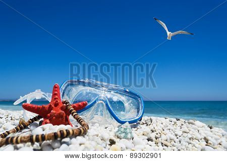 Diving Mask Under A Flying Seagull