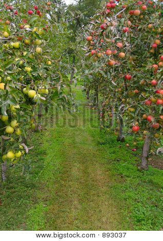 Apple Path