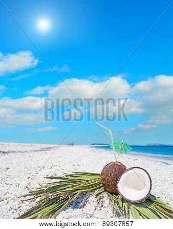 Coconuts And Palm Branches Under The Sun