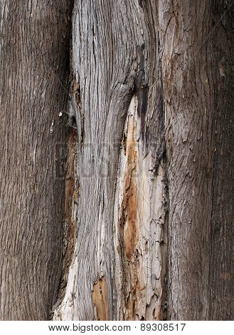 bark3