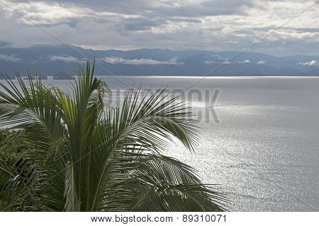 Pacific Ocean Bay With Palm Tree