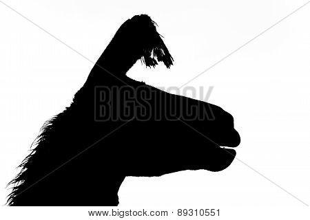 a lama silhouette