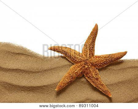 Starfish on Beach Sand. Close up