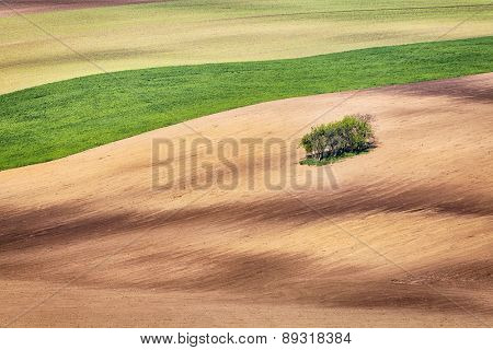 Lines and waves with trees in the spring, South Moravia, Czech Republic