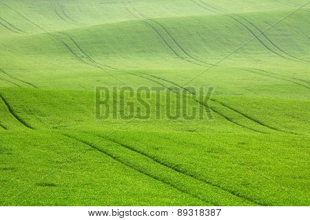 Morning dew on the field waves, South Moravia, Czech Republic