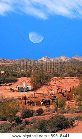 Horses With Moon Rising