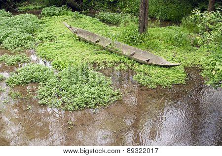 canoe in the swamp