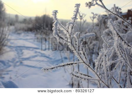 Hoarfrost on dry grass