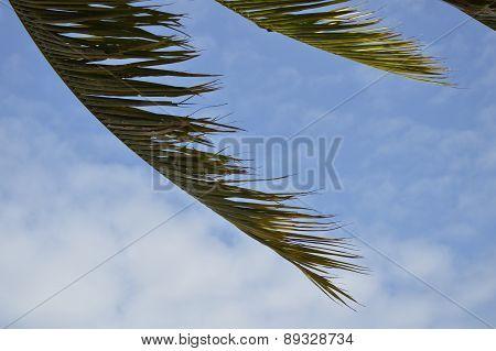coconut leaf blown away