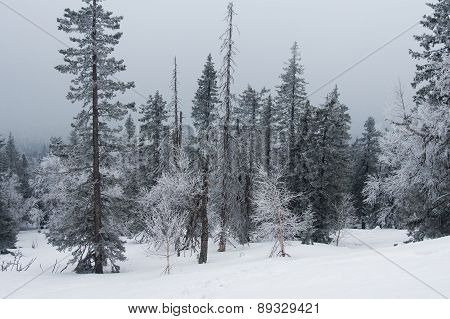 Snow-covered Forest On The Slopes Of The Mountain.