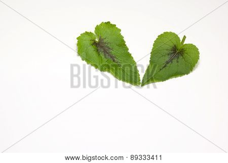 The leaves from the heart