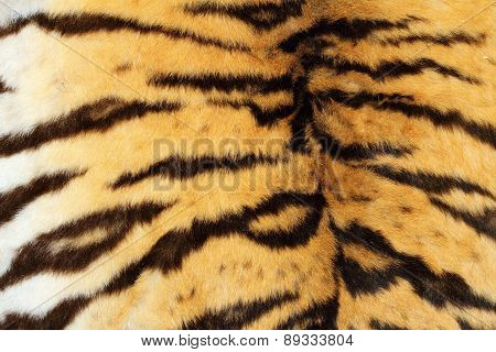 Real Tiger Textured Fur