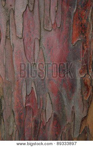 Taxus Baccata Bark