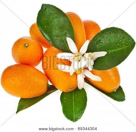 Pile heap of kumquat citrus fruit close up isolated on white background