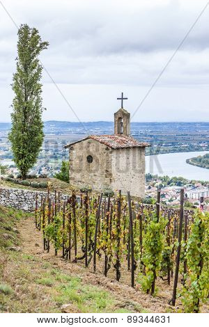 grand cru vineyard and Chapel of St. Christopher,´Hermitage, Rhone-Alpes, France