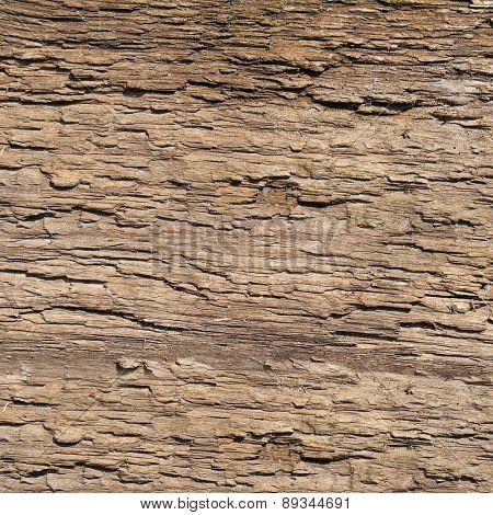 bark old tree. wood texture