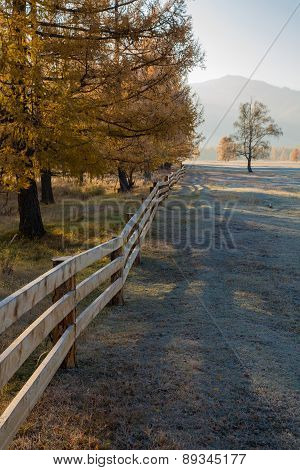Autumn, Yellow Larch And Wooden Fence