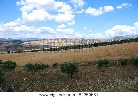 Wheat fields, Andalusia.