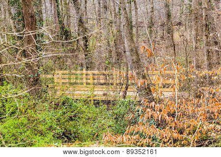 Wood Bridge Through Dense Woods