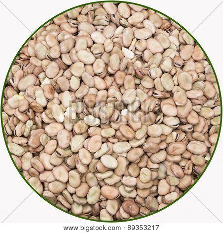 Dried Faba Bean
