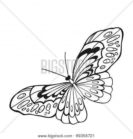 Black And White Butterfly With Open Wings In A Top View.