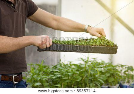 Gardener With Seedlings