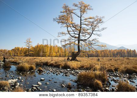 Autumn, Creek, A Lonely Tree