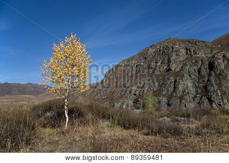 Autumn, Lonely Birch On The Background Cliffs And Blue Sky