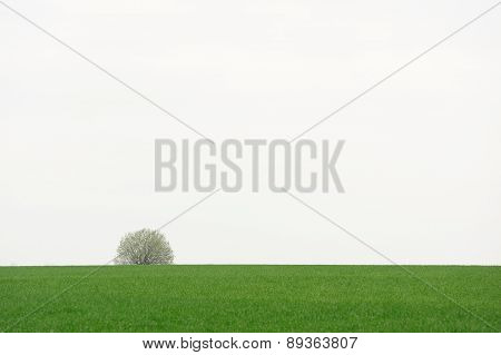 Lonely Tree On Green Field