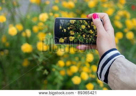 Making Snapshots Of Flowers With Mobile Smart Phone