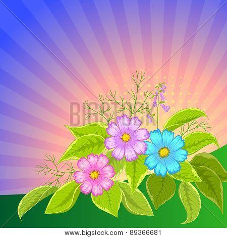 Flower background, cosmos