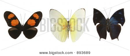 480Colorful Butterflies Over A White Background.