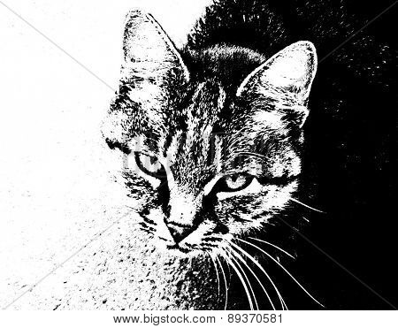 Cat Striped Black And White Portrait