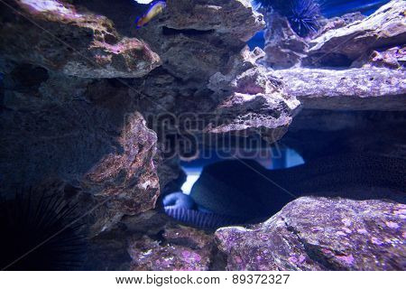 Sea snake hiding into stones at the aquarium