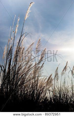 Tropical Grass