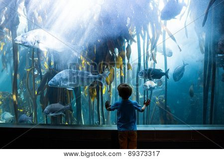 Young man touching a tank with big fish at the aquarium