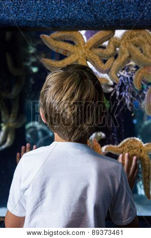 Young man looking at big starfish behind the camera at the aquarium