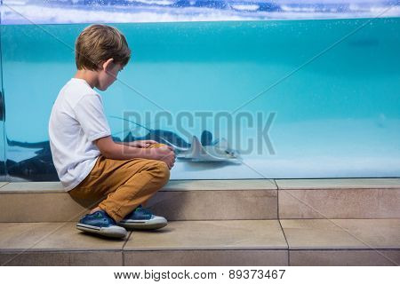 Young man looking at manta ray in a tank at the aquarium