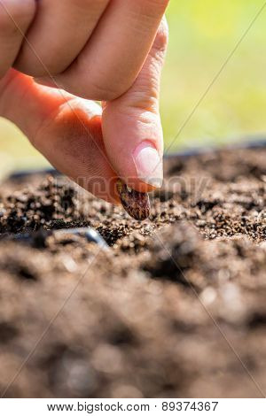 Person Planting A Seed In The Ground