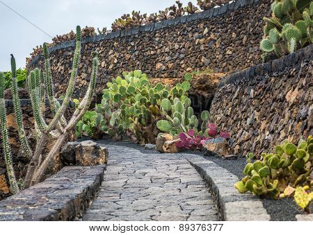 cactus garden, garden de cactus in Guatiza, Lanzarote, Canary Islands, Spain